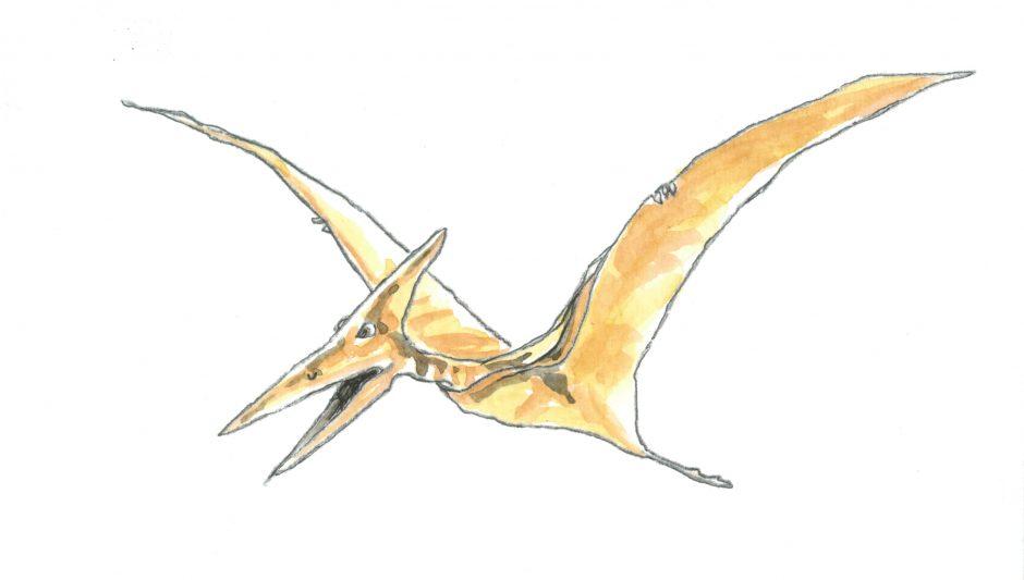 pterodactil 2