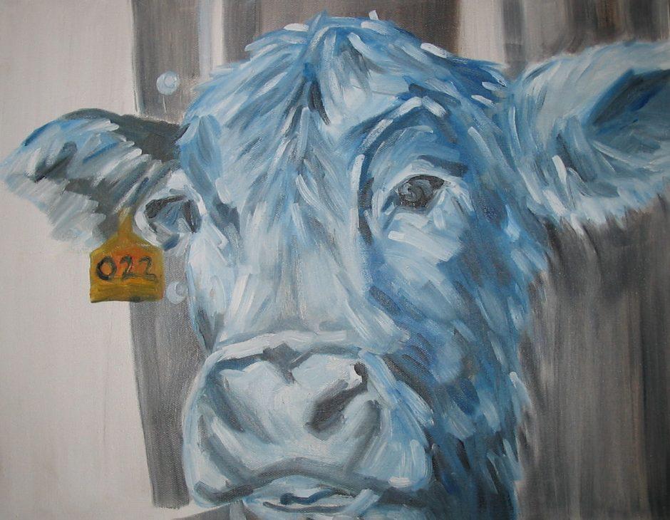 tagged cow ear