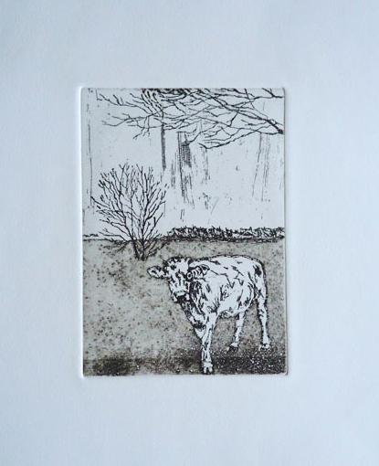 cow in field - black